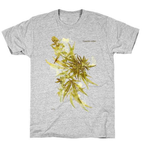 Cannabis Botanical Illustration T-Shirt