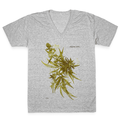 Cannabis Botanical Illustration V-Neck Tee Shirt