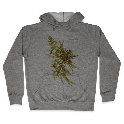 Cannabis Botanical Illustration Hooded Sweatshirt