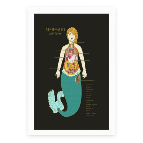Mermaid Anatomy Poster