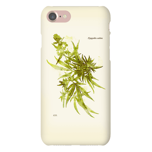 Cannabis Botanical Illustration