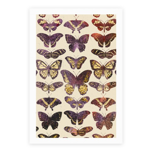 Butterfly Species Pattern Poster