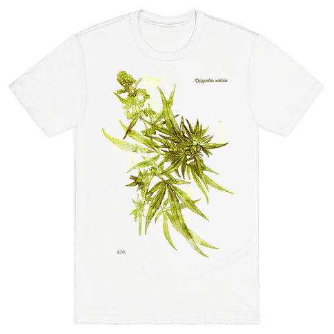 Cannabis Botanical Illustration Mens T-Shirt