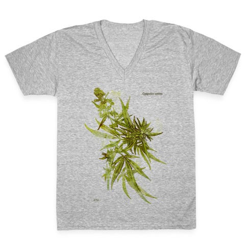 Cannabis Botanical Illustration V-Neck Tee Shirt