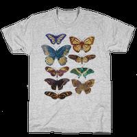 Butterfly Species