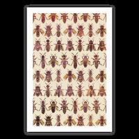 Bee Species Pattern