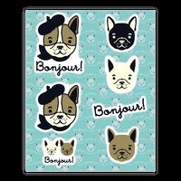 Bonjour French Bulldog